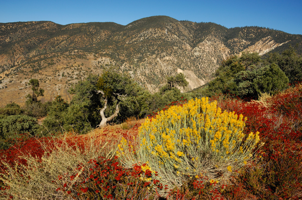 Ojai-Los-Padres-National-Forest