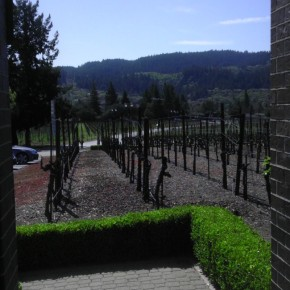 TheDuaneWells.com - Ledson Winery & Vineyards View