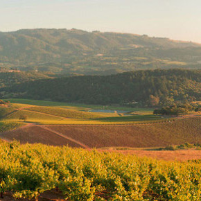 Romance in Sonoma: A Perfect Proposition