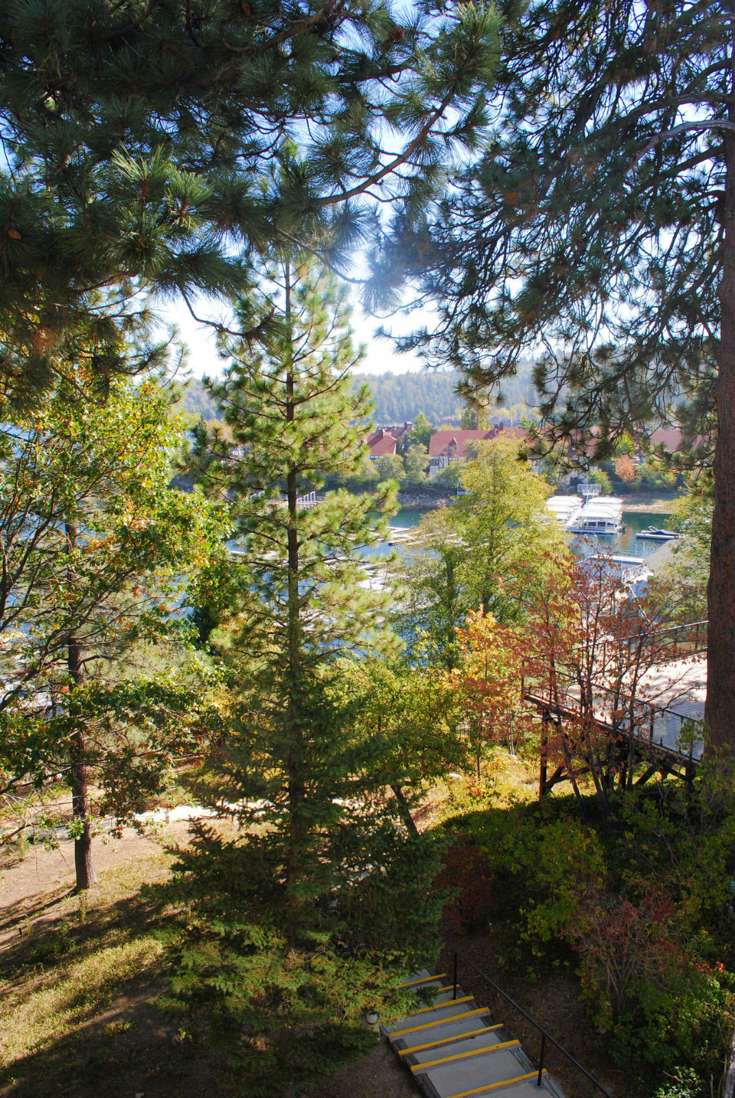 Terrace View | Sky Forest Suite, Lake Arrowhead Resort
