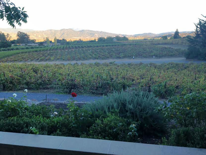 View from Francis Ford Coppola Winery