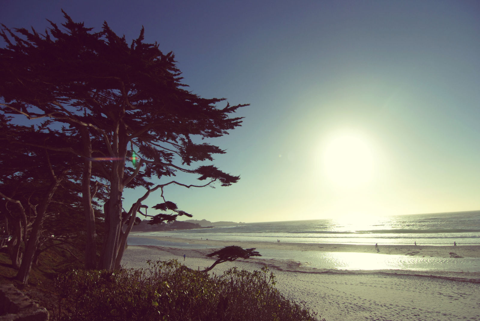 Scenes from the Carmel Coast