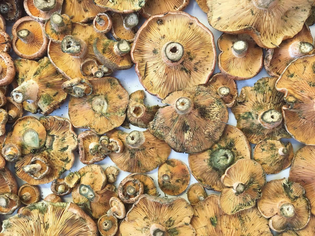 Mushrooms-Central -Market