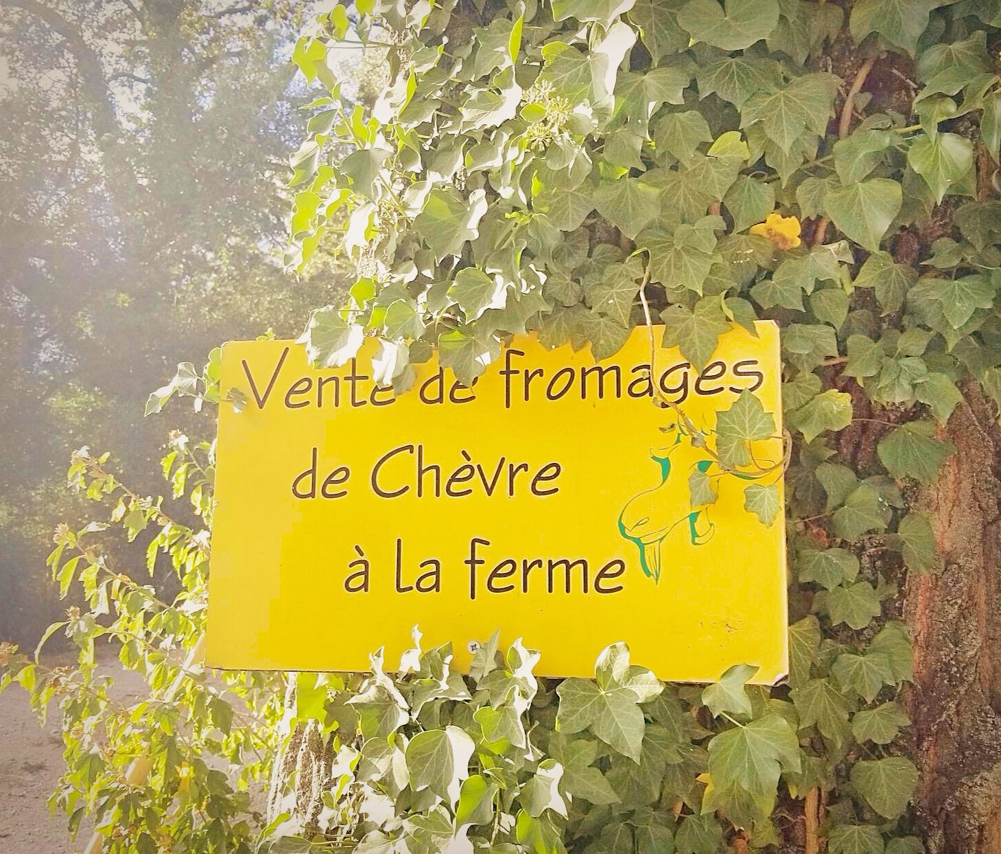 Provence-Fromage-edit